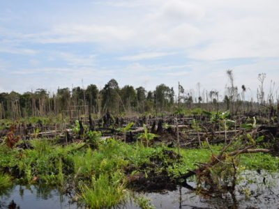 destroyed-rainforest-indonesia