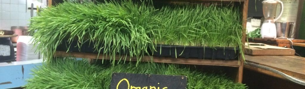 organic-and-healthy_marcel-greenland